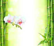 White orchid with bamboo. Beauty and spa background royalty free stock images