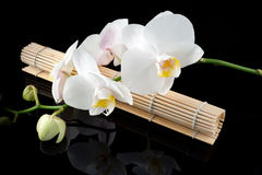 White orchid and bamboo mate. White orchid, bamboo mate on black bacground, mirrored royalty free stock photo