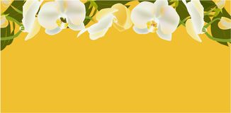 White orchid Banner,  illustration flowers spring royalty free illustration