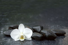 White orchid and black stones close up. Royalty Free Stock Images