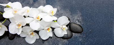 White orchid and black stones close up. Stock Photos