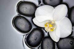 White orchid and black stones. White orchid and black stones immersed in water Royalty Free Stock Photography