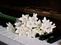 White Orchid on Brown Wooden Piano Royalty Free Stock Image