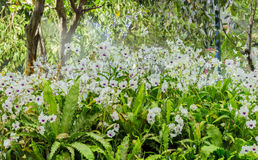 White orchid. Bush of white orchid in garden Stock Image