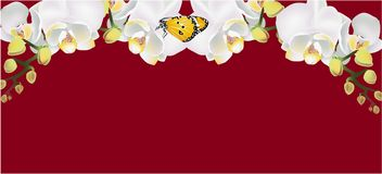 White orchid and Butterfly Banner,  illustration stock illustration
