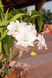 White orchid. Close up White orchid with the leaf royalty free stock image
