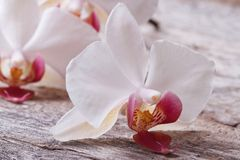 White orchid close up on a old wooden table Stock Images