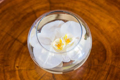 White orchid flower in glass vase with water on wooden backgroun Royalty Free Stock Photo