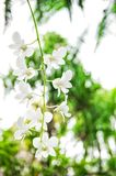 White orchid flower green tropical plants. White orchid flower with green tropical plants. Selective focus Royalty Free Stock Photo