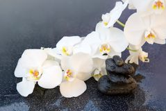 White orchids flowers and spa stones . Spa background. Royalty Free Stock Images