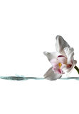 White orchid flower and stream of water for spa Stock Photos