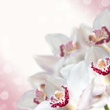 White orchid flowers with beautiful bokeh Stock Image