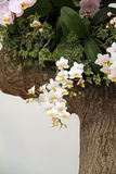 White orchid flowers blossoming Stock Photography