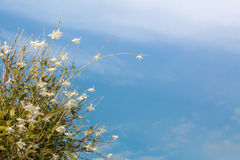 White orchid flowers in the blue sky in Phuket Thailand. Beautiful white orchid flowers in the blue sky in Phuket Thailand stock photo