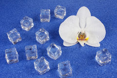 White orchid flowers and ice cubes over blue background. Stock Images