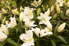 White Orchid. Garden on First Day of Spring Royalty Free Stock Image