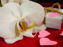 White orchid and gift box on a red background, Valentines Day background. Small paper hearts. Stock Image