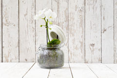 White orchid in glass pot, on white wooden planks Stock Images