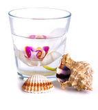 Orchid in a glass with water Stock Image