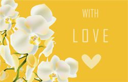 White orchid greeting card vector holiday love royalty free illustration