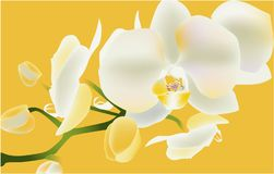 White orchid,  illustration flower tropic love stock illustration