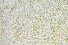 White orchid petal background Stock Photos
