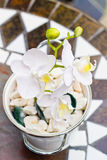 White orchid Phalaenopsis with flowers Royalty Free Stock Image