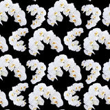 White orchid seamless pattern Royalty Free Stock Images