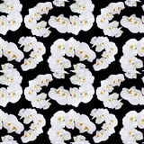 White orchid seamless pattern Stock Photography