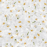 White orchid seamless texture. Floral background. White orchid seamless texture Royalty Free Stock Photos