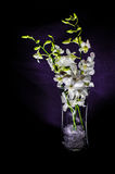 White orchid. Small white orchid in a vase Stock Photos