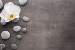 White orchid and spa stones on the grey background. Stock Photos