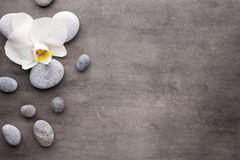 White orchid and spa stones on the grey background. Stock Image