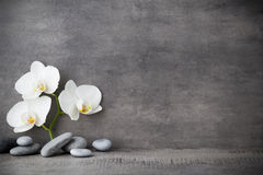White orchid and spa stones on the grey background. Spa stones and white orchid on the grey  background Royalty Free Stock Images