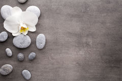 White orchid and spa stones on the grey background. Royalty Free Stock Photos