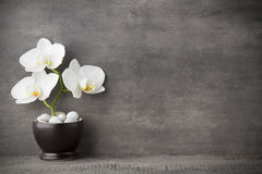 White orchid and spa stones on the grey background. Stock Photo