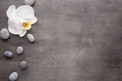 White orchid and spa stones on the grey background. Royalty Free Stock Photography