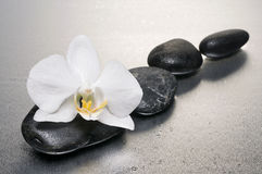 White orchid and stones over wet surface royalty free stock photo