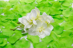 White orchid surrounded by green petals Stock Image