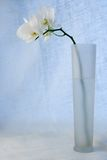 White orchid in vase Stock Images