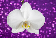 White orchid on violet glitter background Stock Images