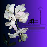 White orchid witha dating couple Stock Photo