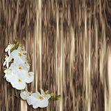 White orchid on wood plank background Royalty Free Stock Photo