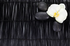 White orchid with zen stones on black background Royalty Free Stock Image