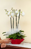 White orchids. Stock Photo