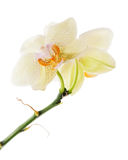 Orchids arrangement centerpiece isolated on white background Royalty Free Stock Photography