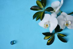 White orchids  on blue background. White orchids on blue background. Place for your text Royalty Free Stock Image
