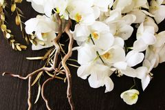 Lovely orchids. White orchids on a dark background Royalty Free Stock Image