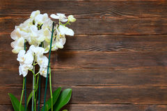 White orchids on a dark wooden background with blank space for t. Ext Stock Photos