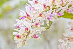 White orchids flowers. On background Stock Image